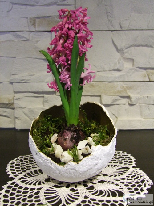 Doniczka Na Kwiatek W Kształcie Skorupki Z Jajka Zrobiona Z